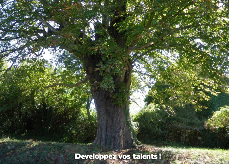 Developper-ses-talents